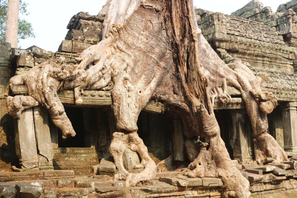 The power of nature can be seen in the ruins of Angkor. Trees can crumble massive walls.